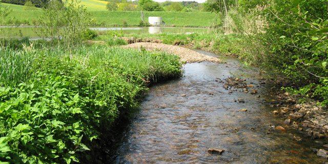 Einlaufbereich des Wohmbaches in den Dauerstau des Hochwasserrückhaltebeckens Obereiper Mühle